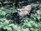 2021 Cannondale Trail 8 Review